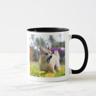 Mug Notre kekai de chien. Il est à moitié pomeranian