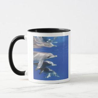 Mug Océan atlantique a repéré des dauphins. Bimini,