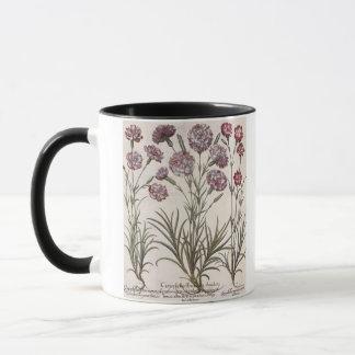 Mug Oeillets : majore du flore 1.Caryophyllus ; 2.