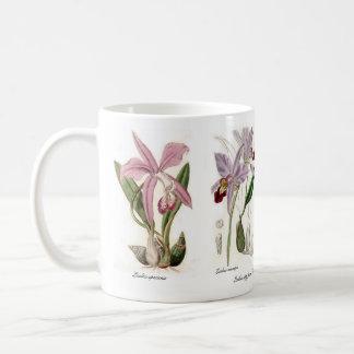 Mug Orchidées