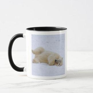 Mug ours blanc, maritimus d'Ursus, roulement de petit