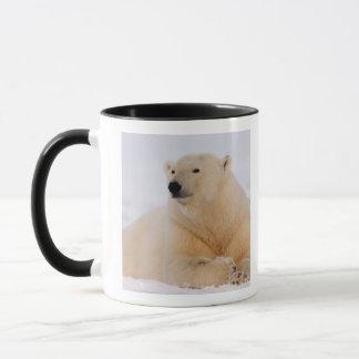 Mug ours blanc, maritimus d'Ursus, se reposant sur