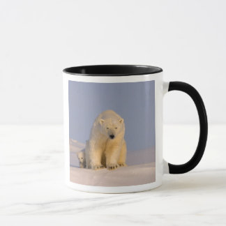 Mug ours blanc, maritimus d'Ursus, truie avec