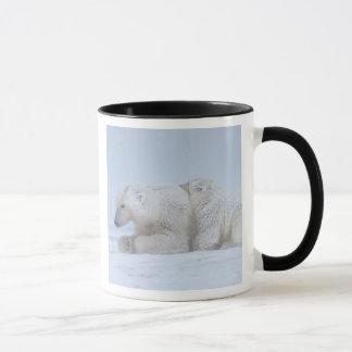 Mug ours blanc, maritimus d'Ursus, truie avec l'petit