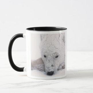 Mug Ours blanc, Urus Maritimus, Arctique, Churchill,