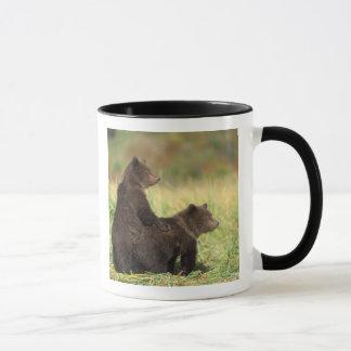 Mug ours brun, arctos d'Ursus, ours gris, Ursus 2