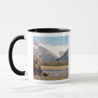 Mug ours brun, arctos d'Ursus, ours gris, Ursus 5