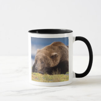 Mug ours brun, arctos d'Ursus, ours gris, Ursus 8