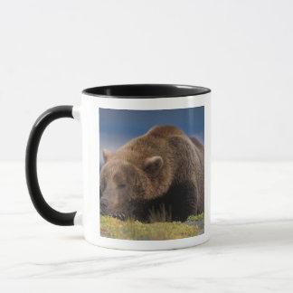 Mug Ours de Brown, ours gris, prenant un petit somme,