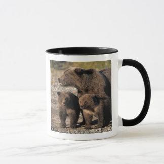 Mug Ours de Brown, ours gris, truie avec le regard de