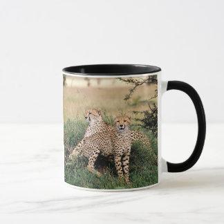 Mug Paires de guépard