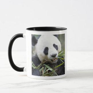 Mug Panda mangeant des pousses de bambou Alluropoda 2