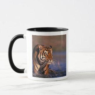 Mug Panthera le Tigre de tigre de l'Asie, de l'Inde,