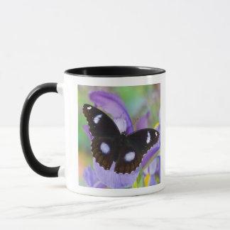 Mug Papillons tropicaux de Sammamish Washington