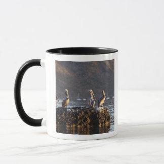 Mug Pélicans de Brown sur la roche dans Puerto