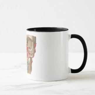 Mug Photo de détenu Pterygopalatine de Fossa