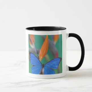 Mug Photographie de Sammamish Washington de papillon