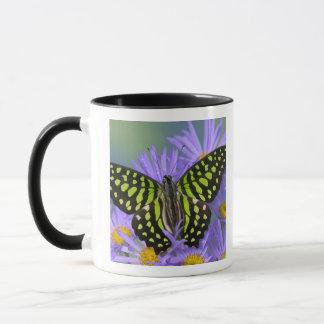 Mug Photographie de Sammamish Washington de papillon