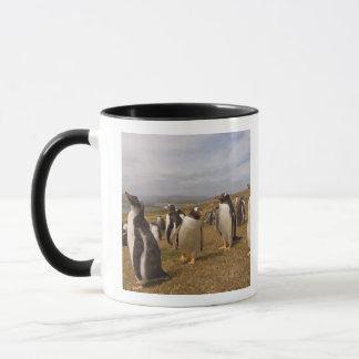 Mug pingouin de gentoo, Pygoscelis Papouasie, colonie