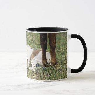 Mug Plan rapproché de cheval et de colt de bébé