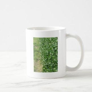 Mug Plante de pois fleurissant dans un domaine. La