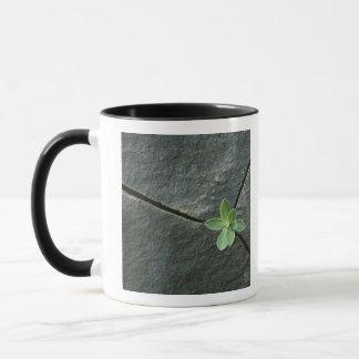 Mug Plante s'élevant à Boulder criqué