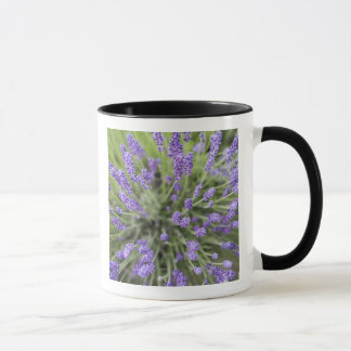 Mug Plantes de lavande