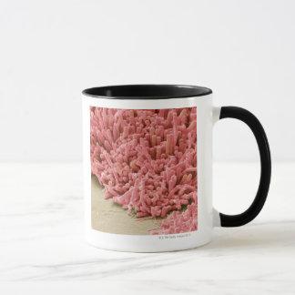 Mug Plaque-formation des bactéries, balayage coloré