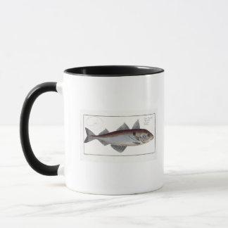 Mug Plat LXII d'aiglefins (Gadus Aeglefinus) de