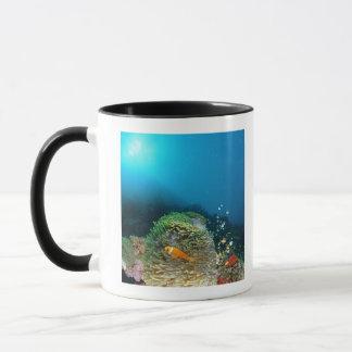 Mug Poissons d'anémone des Maldives nageant sous l'eau