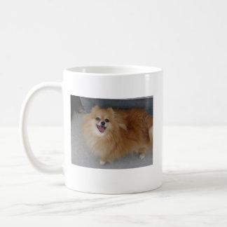 Mug Pomeranian - sushi