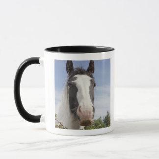 Mug Portrait de cheval de Clydesdale