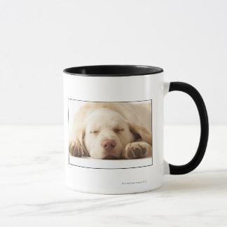 Mug Portrait de studio de labrador retriever jaune