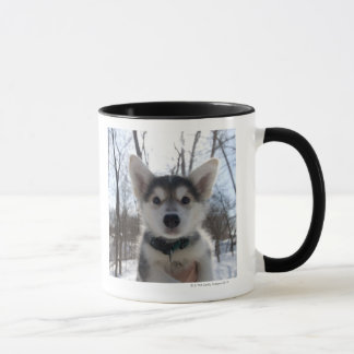 Mug Portrait extérieur de chiot enroué de chien