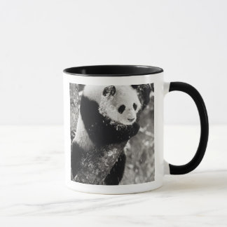 Mug Province de l'Asie, Chine, Sichuan. Panda géant