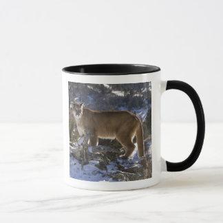 Mug Puma, aka puma, puma ; Concolor de puma,