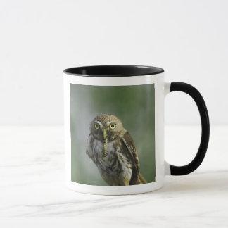 Mug Pygmée-Hibou ferrugineux, brasilianum de