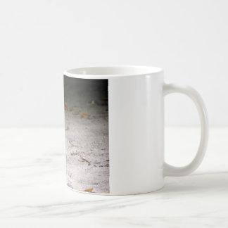 Mug rail Cuir-réuni, philippensis de Gallirallus