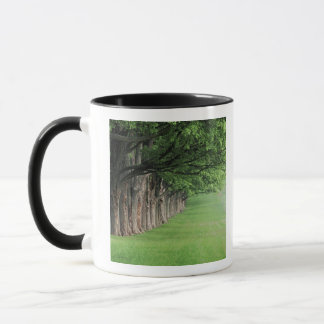 Mug Rangée majestueuse des arbres, Louisville,