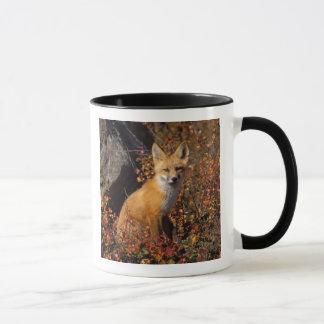 Mug renard rouge, vulpes de Vulpes, dans des couleurs