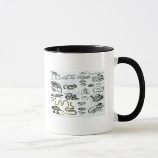 Mug Reptiles, serpents et lézards