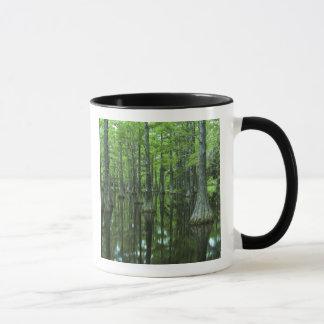 Mug Réserve forestière des Etats-Unis, la Floride,