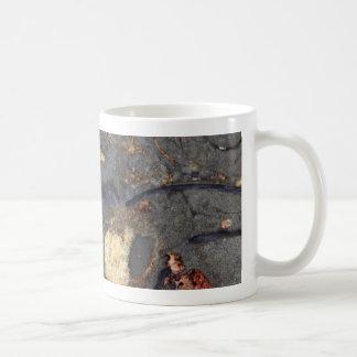 Mug Roche de carbonate avec des fossiles