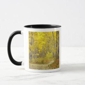 Mug Route avec des couleurs d'automne et trembles dans