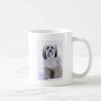 Mug Sable et blanc de Terrier tibétain
