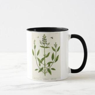 "Mug Salviam ""d'un de fines herbes curieux"", 1782"