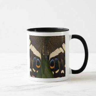 Mug Sammamish, papillon tropical 12 de Washington