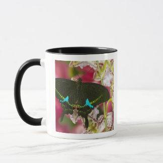 Mug Sammamish, papillon tropical 14 de Washington