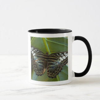 Mug Sammamish, papillon tropical 22 de Washington