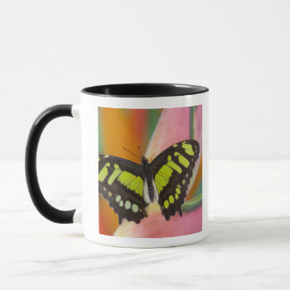 Mug Sammamish, papillon tropical 32 de Washington